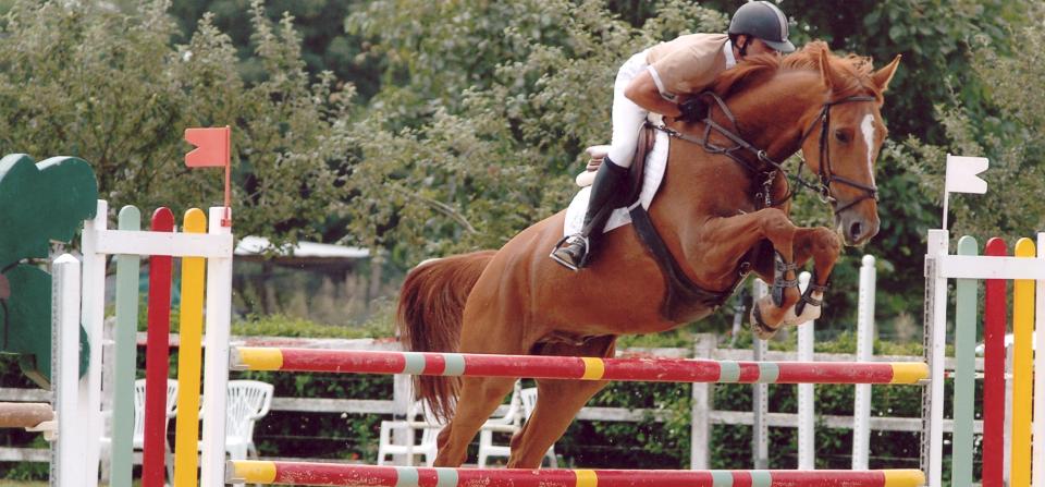 Travail adapté à chaque cheval