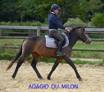 adagio-debourrage-1