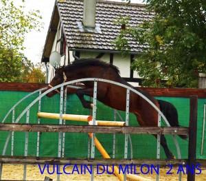 VULCAIN-DU-MILON-2-ANS-SEL