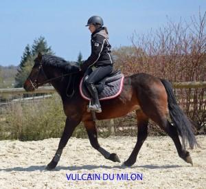 vulcain-trot-4-ans