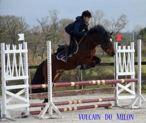 vulcain-6-ans-le-pin-1
